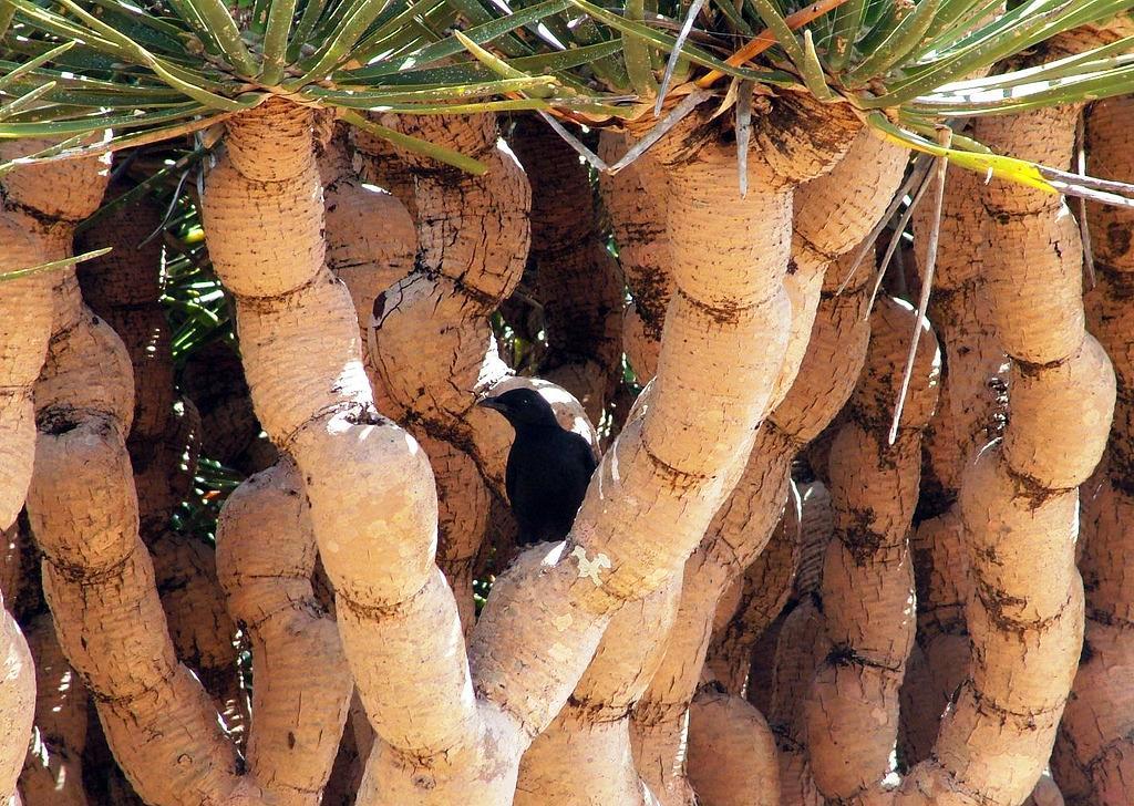 Sokotra - otok koji kao da nije s našeg Planeta Sokotra-pruc5bea-jedinstven-prizor-najvec487e-razlic48ditosti-biljnog-sveta