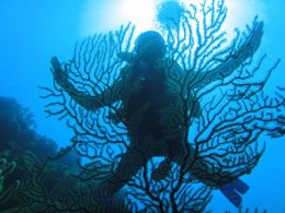 Popular spot among recreational scuba divers