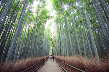 The Bamboo Forest of Sagano, Photograph by Sebbastian