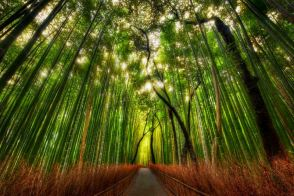 The Bamboo Forest of Sagano, Photograph by TREY RATCLIFF