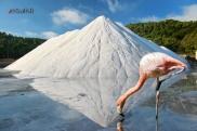 Flamingo u solani, Ibiza, Verbalisti