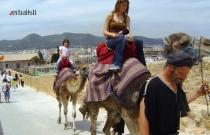 Jahanje kamila, Ibiza 2013 Verbalisti