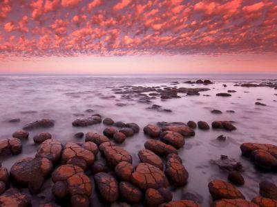 stromatolites at dawn, Shark Bay