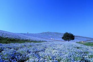 Hitachi Seaside Park, Verbalists travel