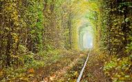 Tunnel of love in autumn