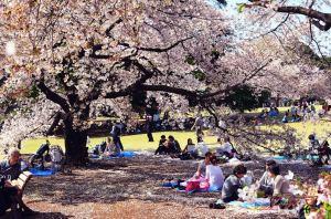 Hanami picnic in Shinjuku park