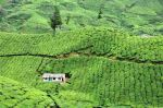Munnar, India, source - Ulrich Lambert